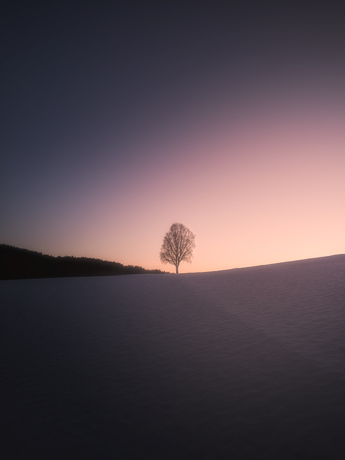 Minimalistic photography of a winter tree.