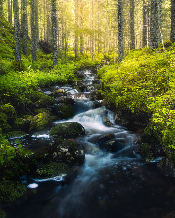 A fern forest near Grong in Norway.