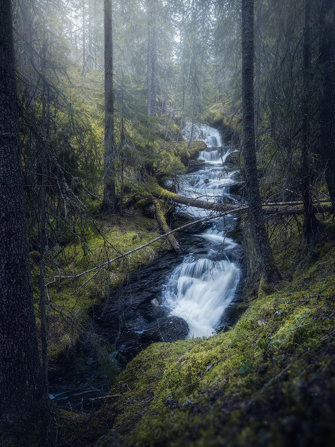 Forest photography from Norway