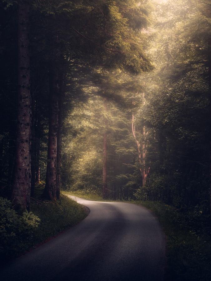 Forest road near Stryn in Norway.